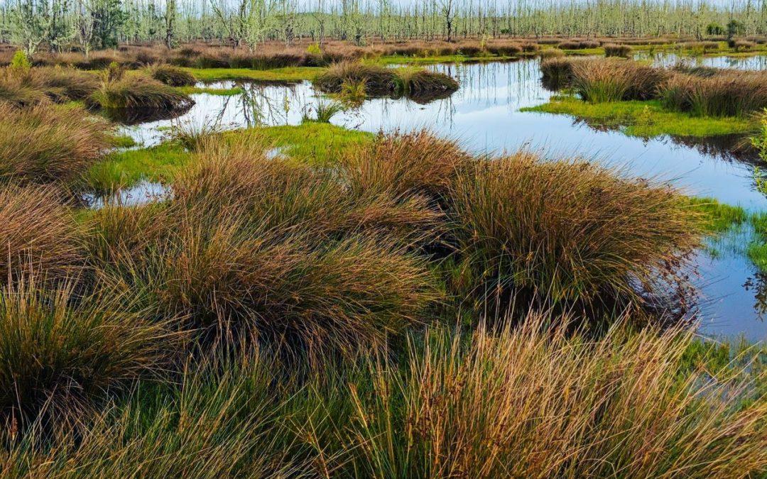 naturbeskyttede områder §3